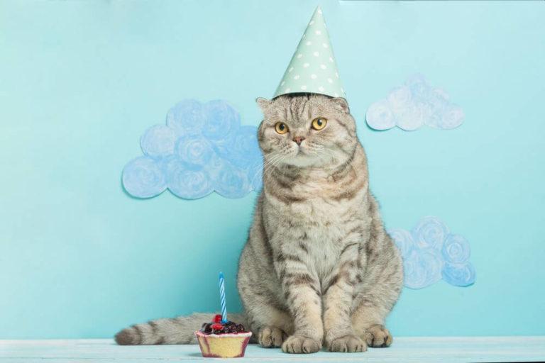 happy birthday cat images