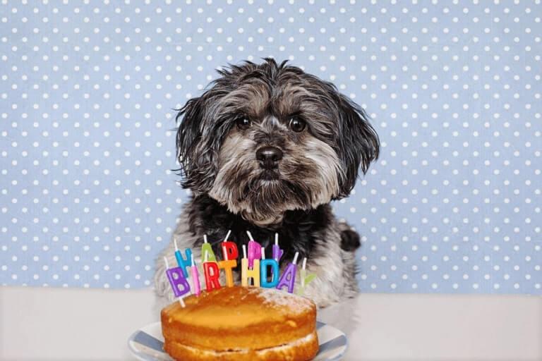 Happy Birthday Pat Cat
