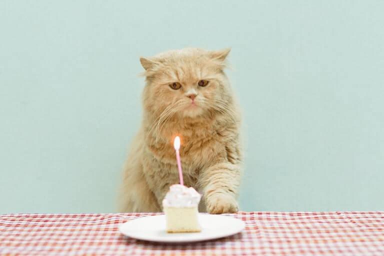 Happy birthday Pat Dog Image