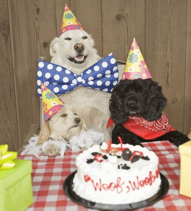 1st Happy birthday Pat