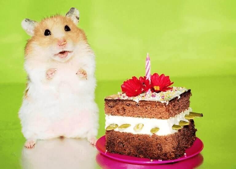 Happy Birthday Pat Funny