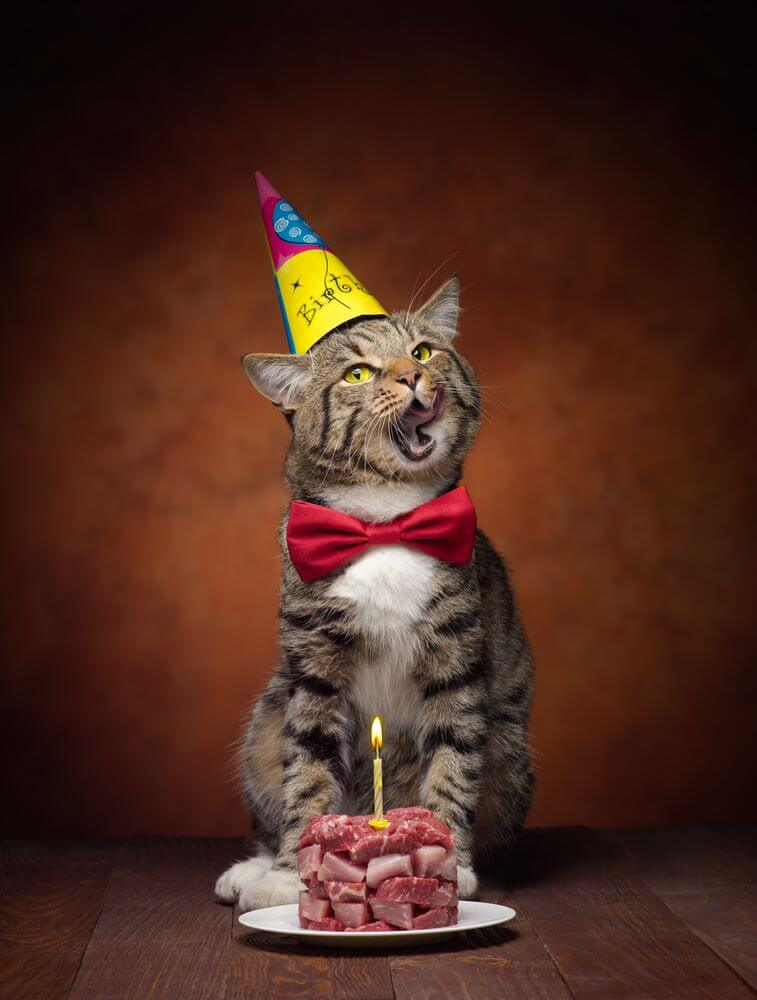 Birthday Cat Images