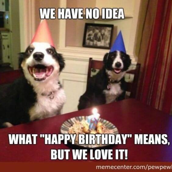 Funny Happy birthday dog meme image