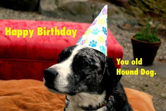 Funny Happy birthday dog meme images