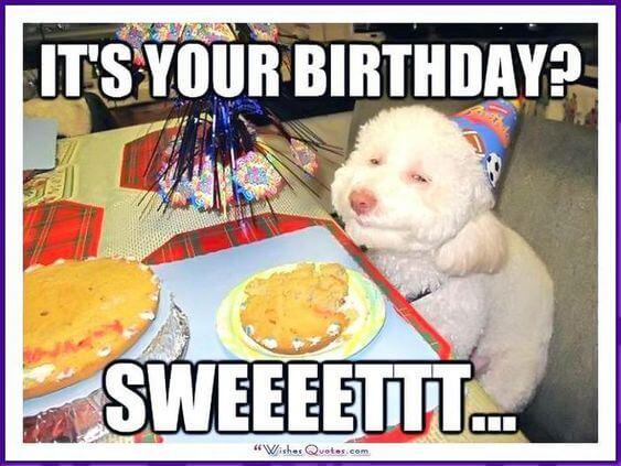 Funny Happy birthday dog meme photo