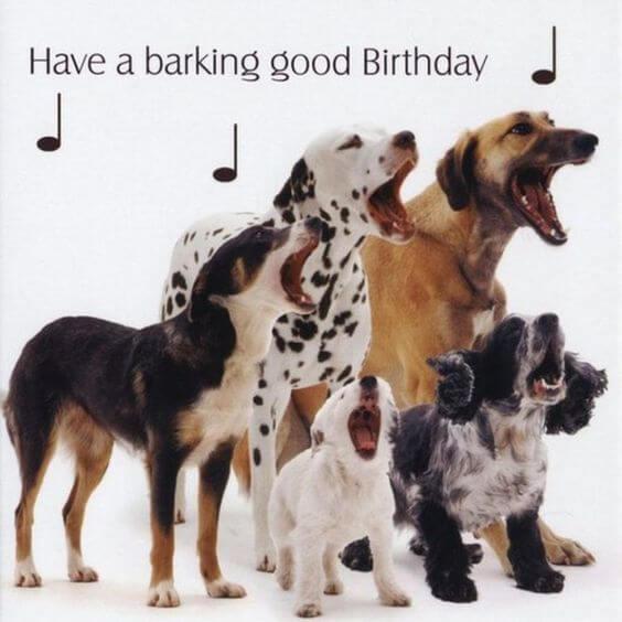 Funny Happy birthday dog meme pics
