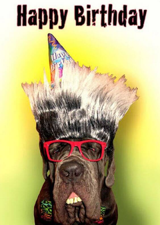 Funny Happy birthday dog meme picture