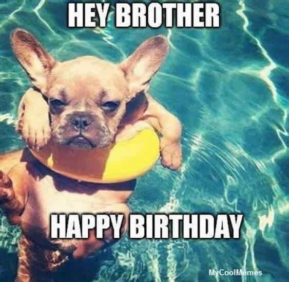 Funny Happy birthday dog meme pictures