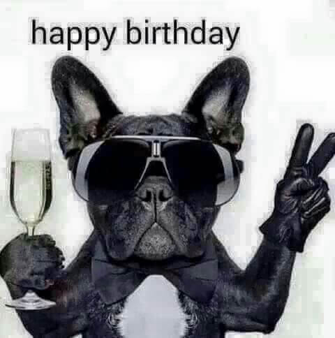 Funny Happy birthday dog meme