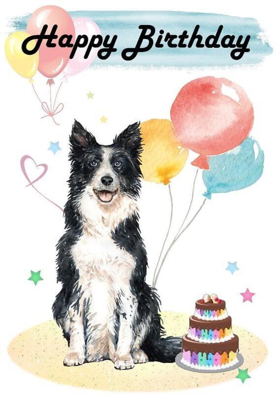 Happy birthday dog funny meme image