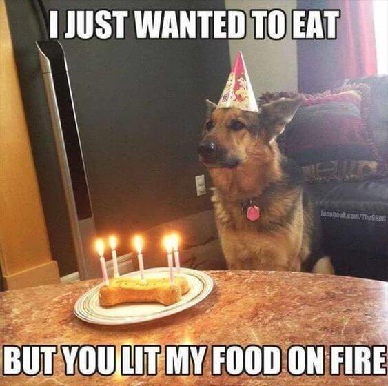 Happy birthday dog funny meme photos