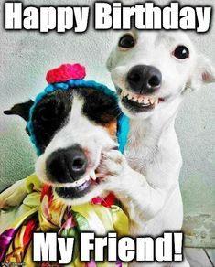 Happy birthday dog funny meme pics