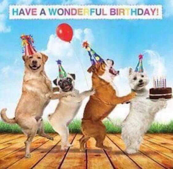 Happy birthday dog funny meme pictures