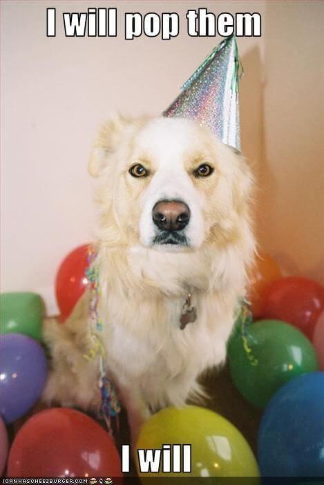 Happy birthday dog funny meme pix