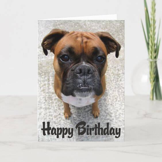 Happy birthday dog funny meme